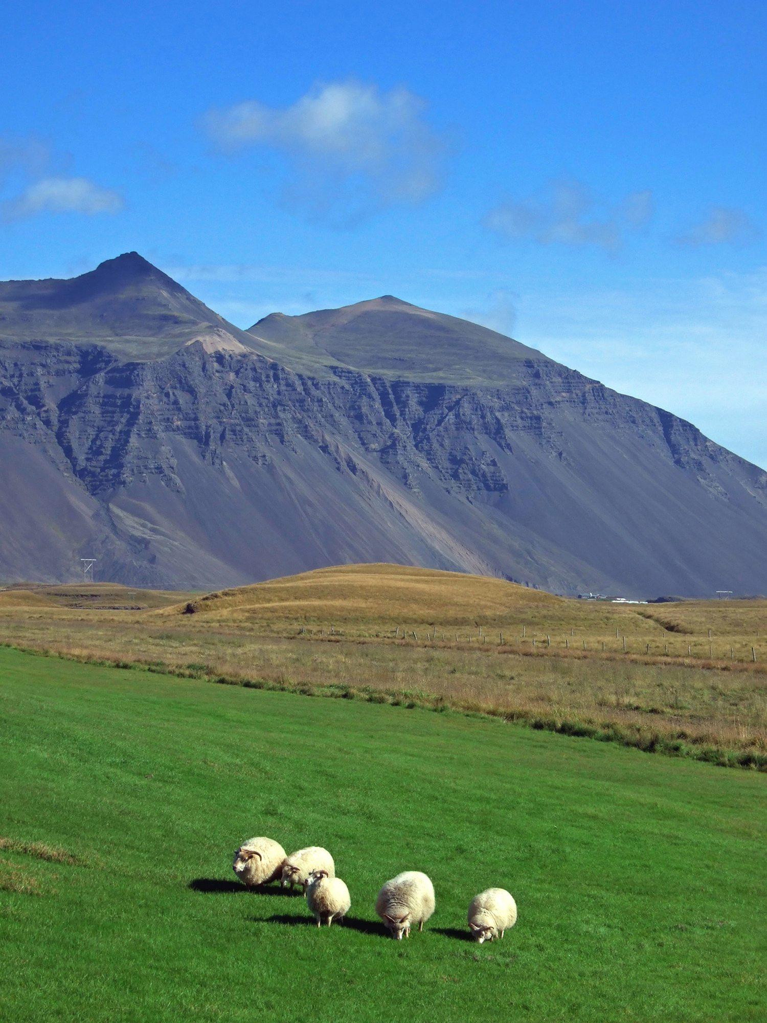 Aðalfundur 2020